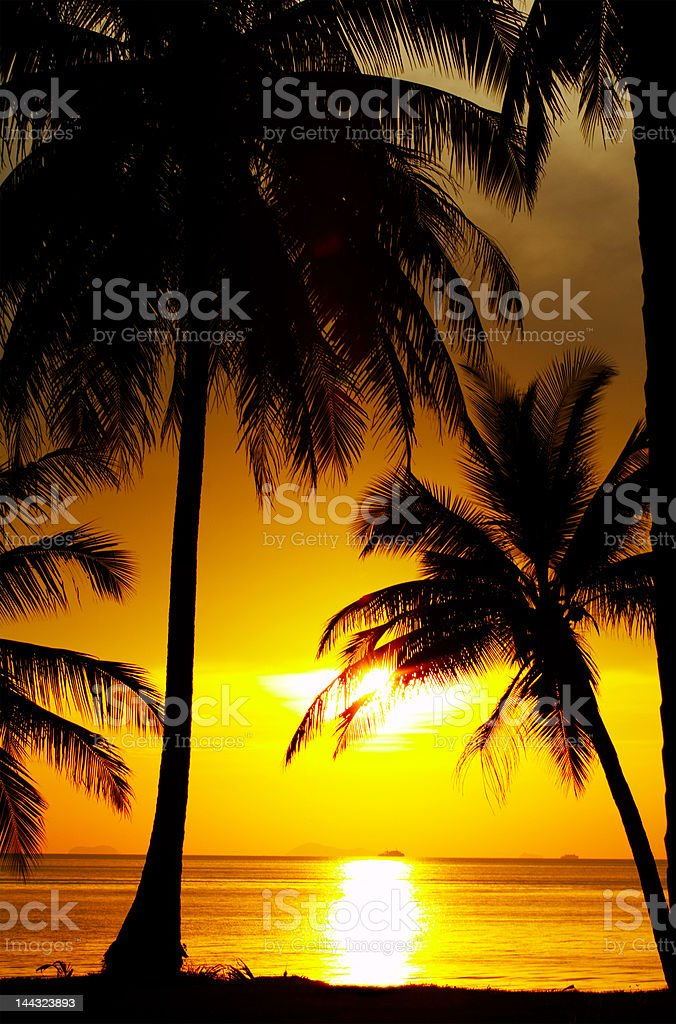 tropical outlines royalty-free stock photo