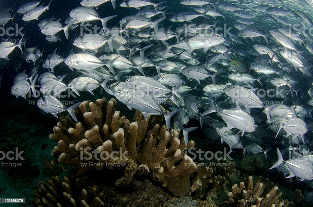 Tropical Pacific royalty-free stock photo