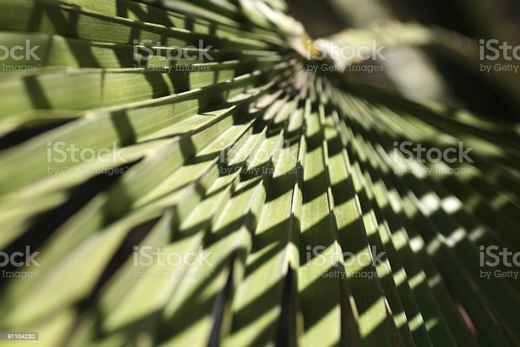 Tropical palm background. stock photo