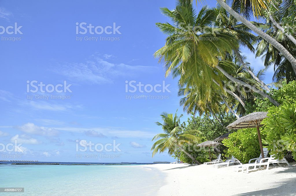 Tropical palm beach royalty-free stock photo