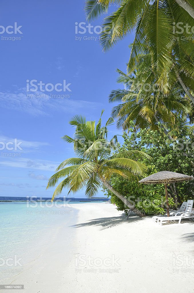 Tropical palm beach with sunbeds stock photo