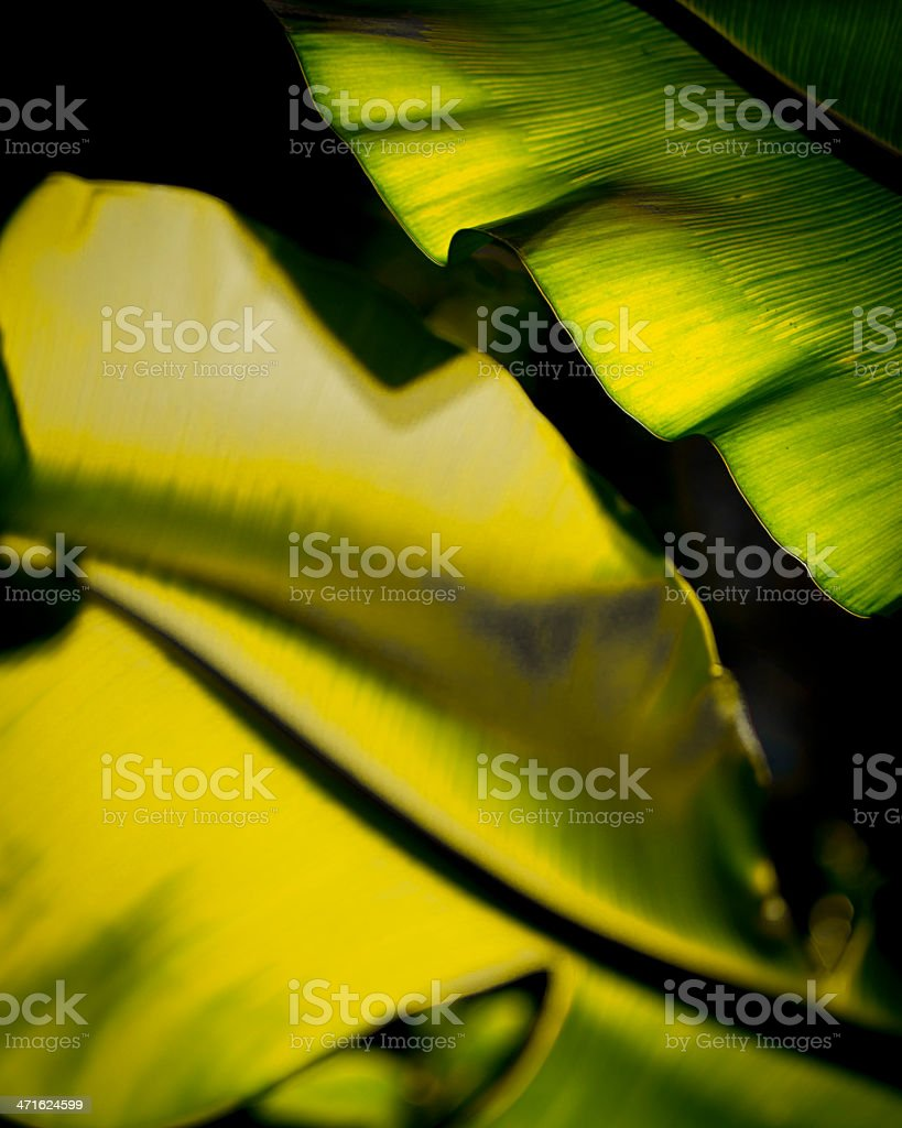 Tropical palm leaf backlit abstract royalty-free stock photo