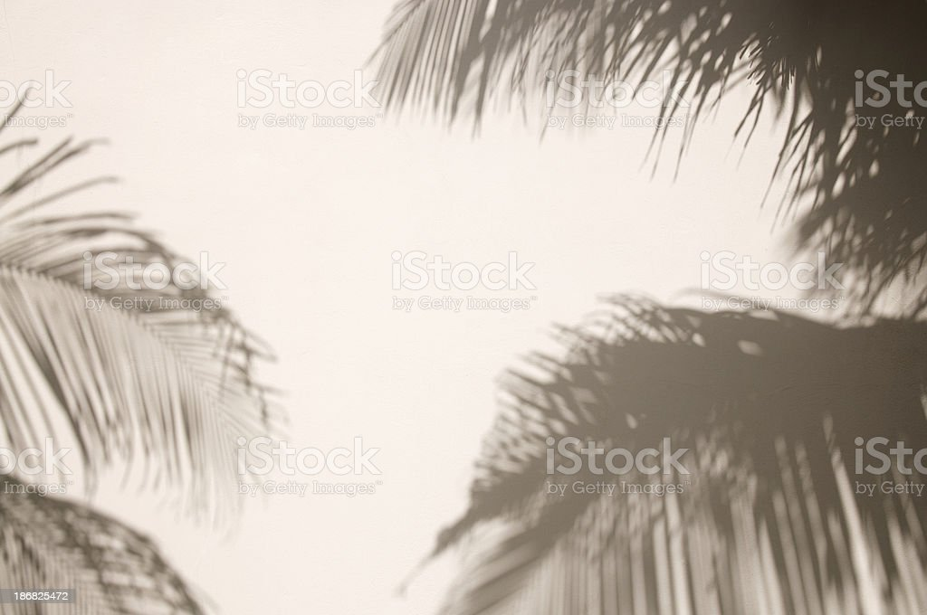 Tropical Palm Shadows on Plain White Wall stock photo