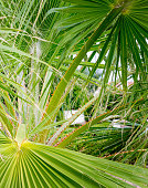Tropical palm thickets