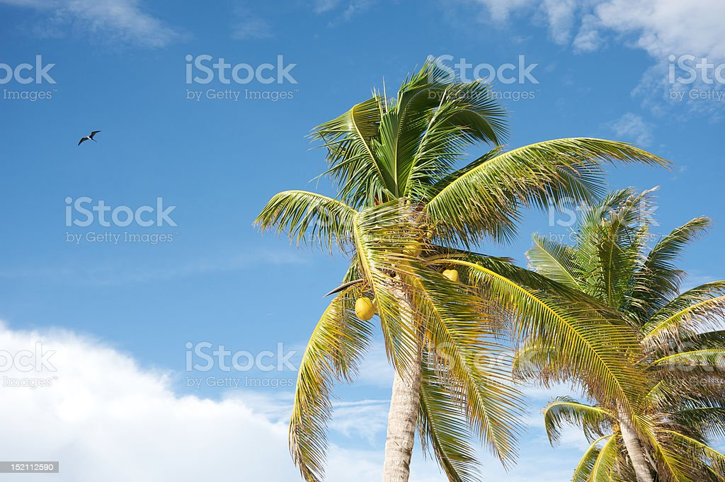 Tropical palm tree and bird royalty-free stock photo