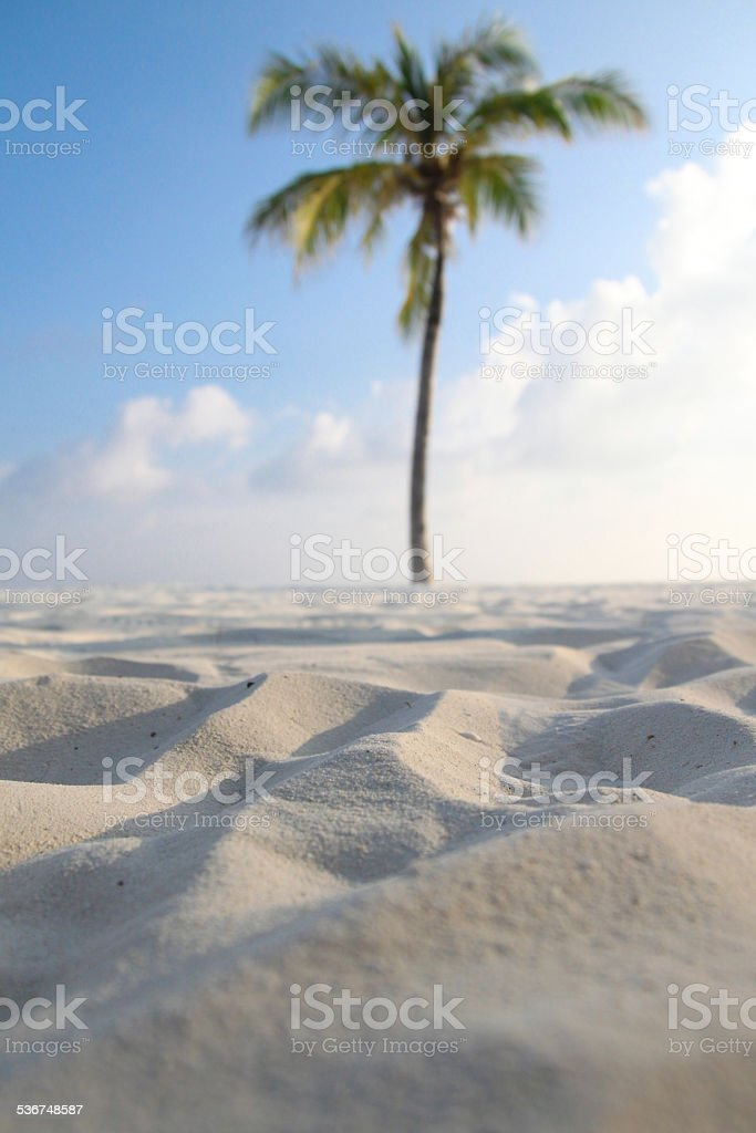Tropical Palm Tree in the Desert stock photo