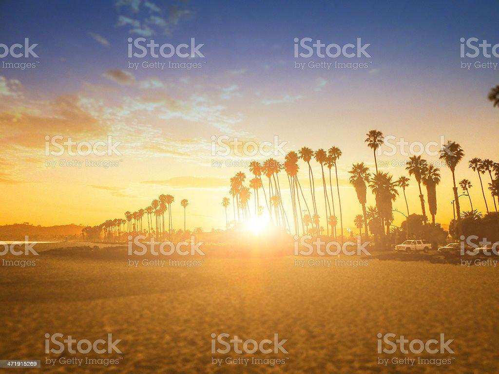Tropical palm tree on santa barbara - los angeles stock photo