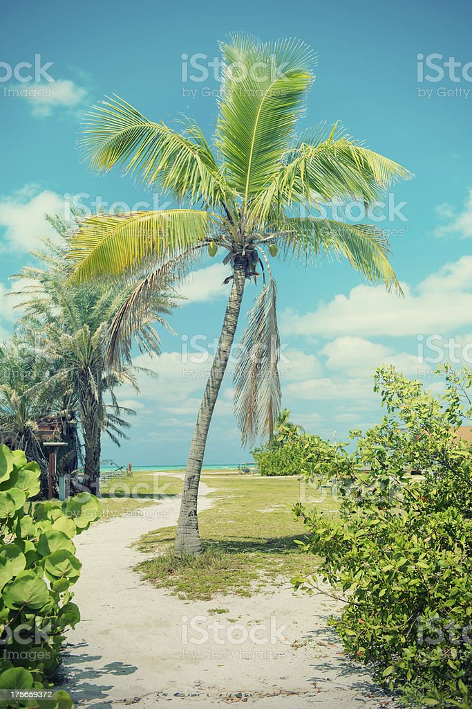 Tropical Palm Tree stock photo