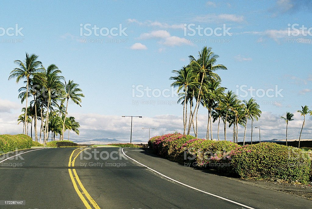 Tropical Palm tree road a Maui Hawaii resort hotel stock photo