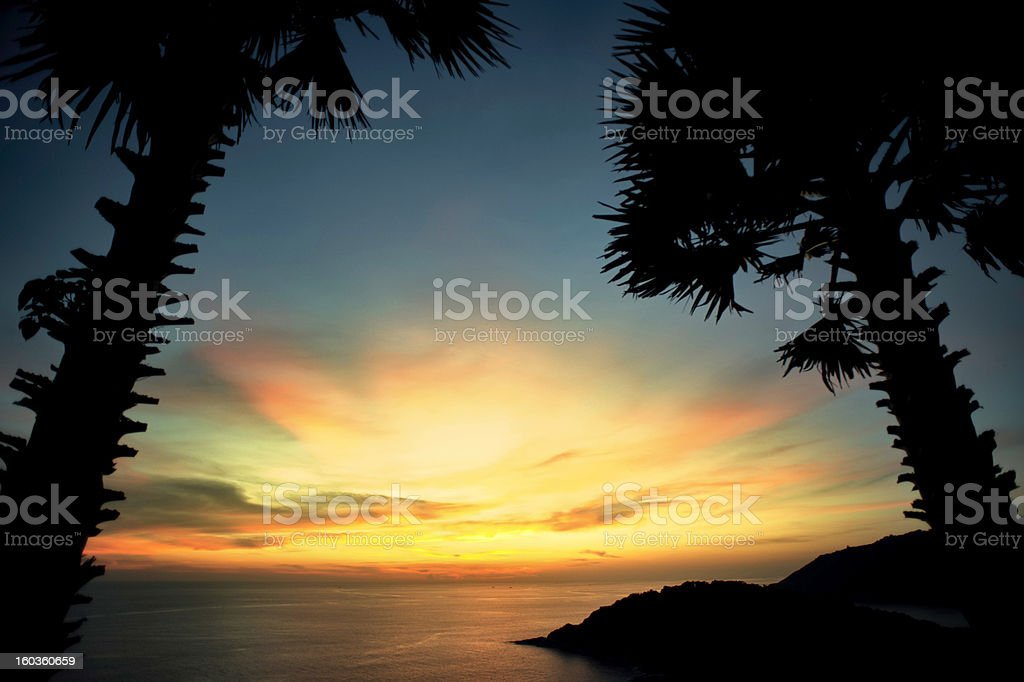Tropical Palm Tree Sunset stock photo