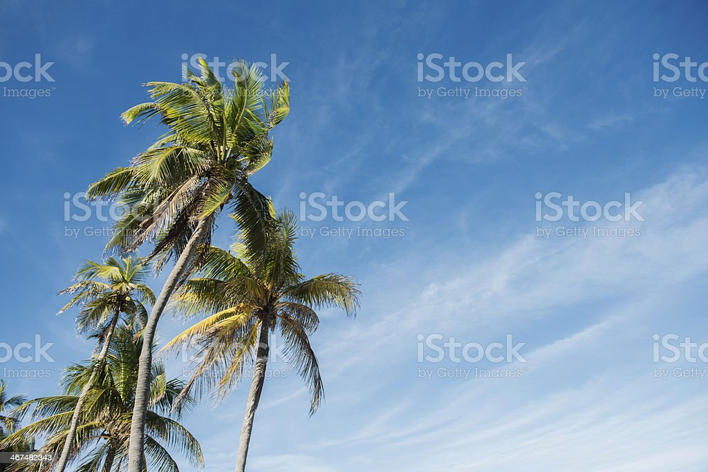 Tropical Palm Trees Against Bright Blue Sky stock photo