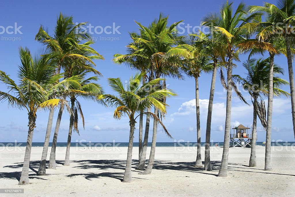 Tropical palm trees on a beach in the sand stock photo