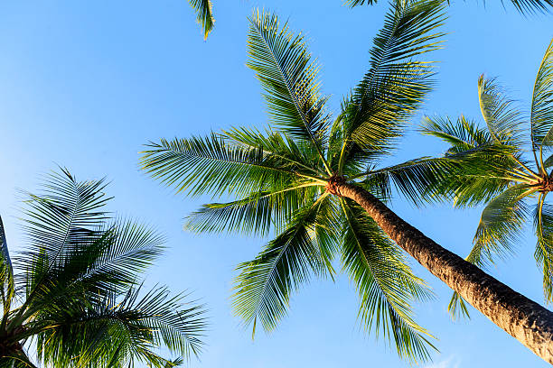 Palm Tree Pictures, Images and Stock Photos - iStock