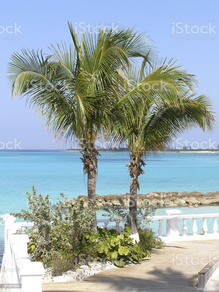 Tropical Palm Trees royalty-free stock photo