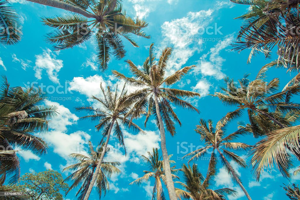 Tropical palms. stock photo