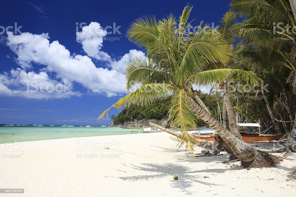 A tropical paradise beach with palm trees royalty-free stock photo