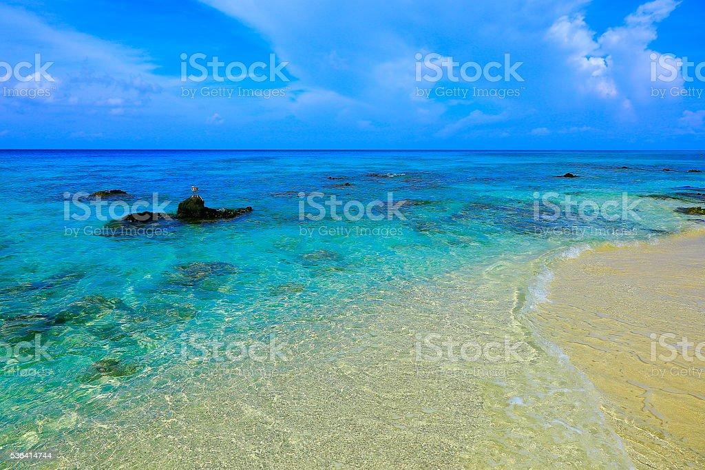 Tropical paradise: bird, turquoise caribbean Sandy beach sunrise, Aruba, Antilles stock photo