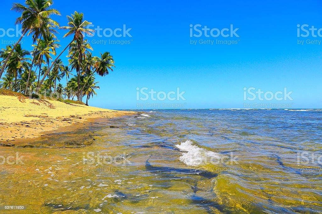 Tropical paradise: idyllic Praia do Forte beach sunrise, Bahia, Brazil stock photo