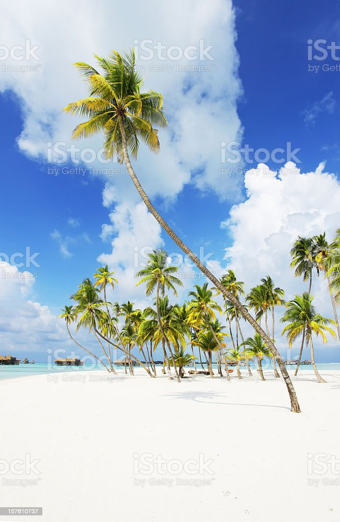 Tropical paradise in Maldives royalty-free stock photo