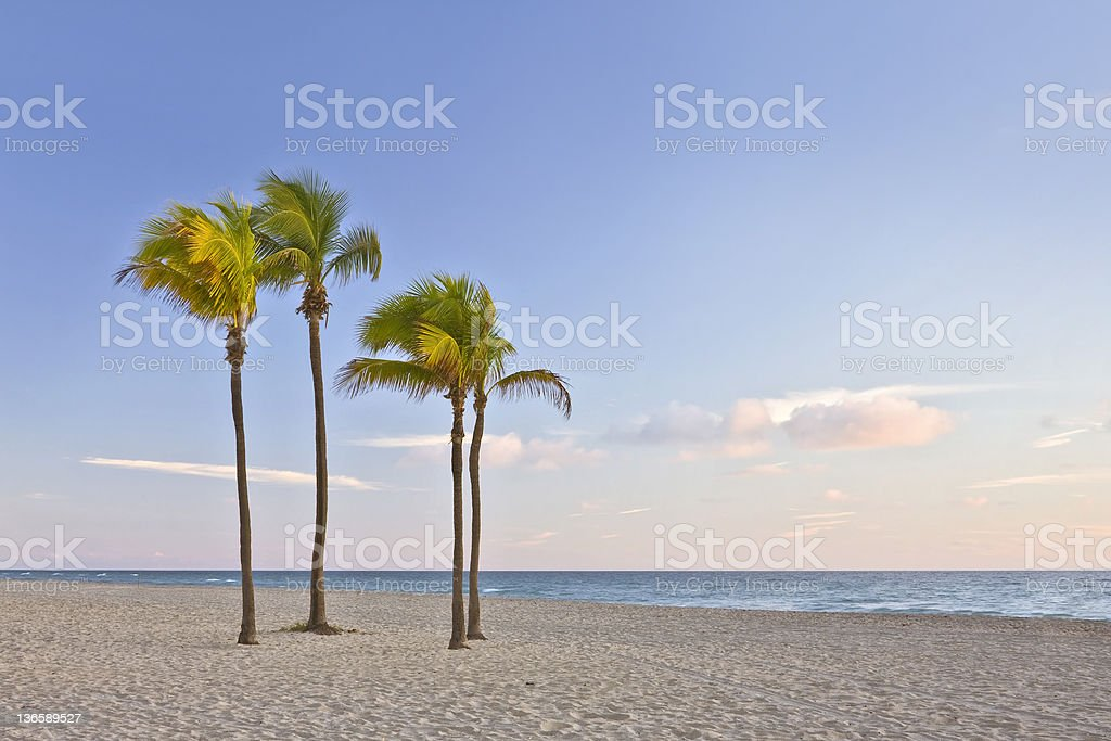 Tropical paradise in Miami Beach Florida with palm trees stock photo