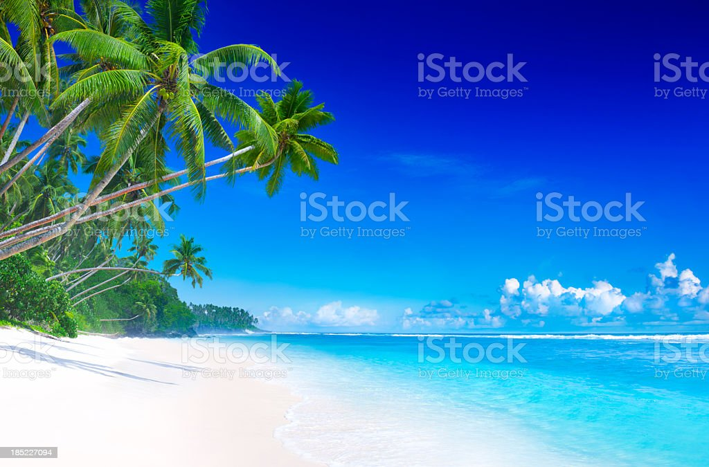 A tropical paradise in summer on the beach with green trees stock photo