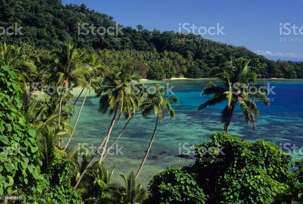 A tropical paradise of a beach and palm trees stock photo