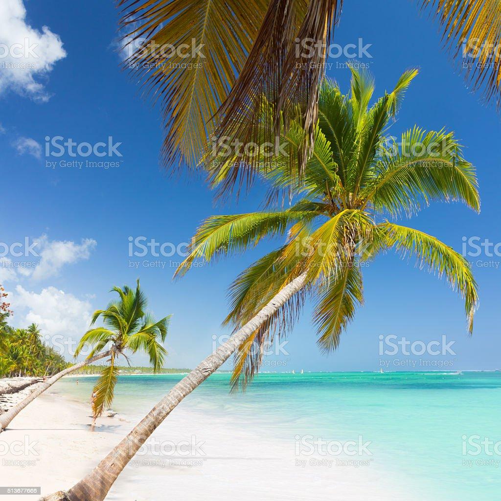 Tropical paradise - palm trees on white sand beach stock photo