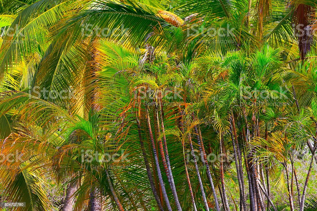 Tropical paradise relax, below Green coconut palm trees foliage pattern stock photo
