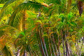 Tropical paradise relax, below Green coconut palm trees foliage pattern