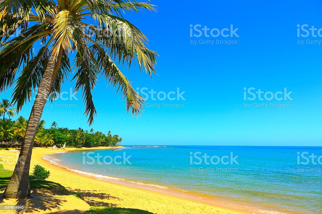 Tropical paradise: sunny idyllic Praia do Forte beach, Bahia, Brazil stock photo