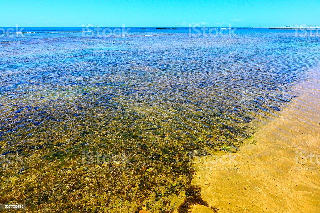Tropical paradise: sunny Praia do Forte beach coral, Bahia, Brazil stock photo