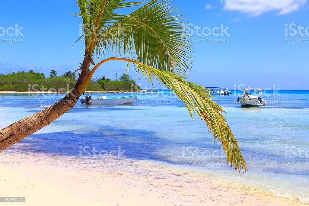 Tropical paradise: turquoise beach, boats, lonely palm tree stock photo