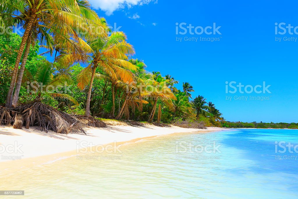 Tropical paradise: turquoise caribbean beach dreamscape, White sand, palm trees stock photo