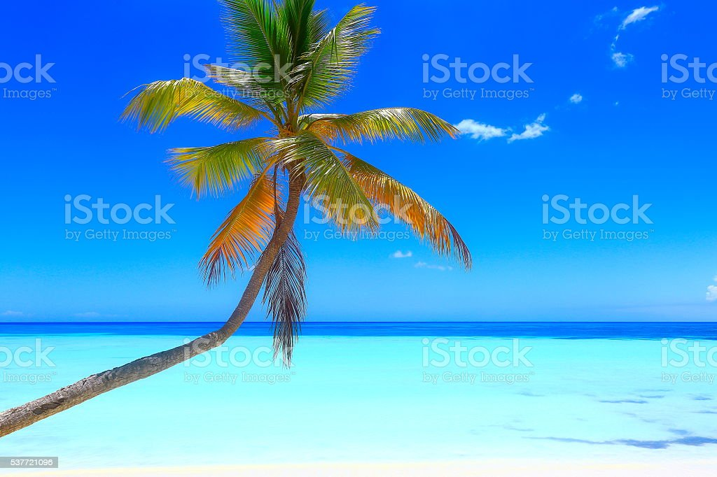 Tropical paradise: turquoise caribbean beach, White sand, lonely palm tree stock photo