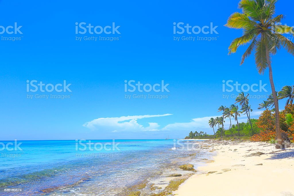 Tropical paradise: turquoise sand beach, palm trees and blue sky stock photo