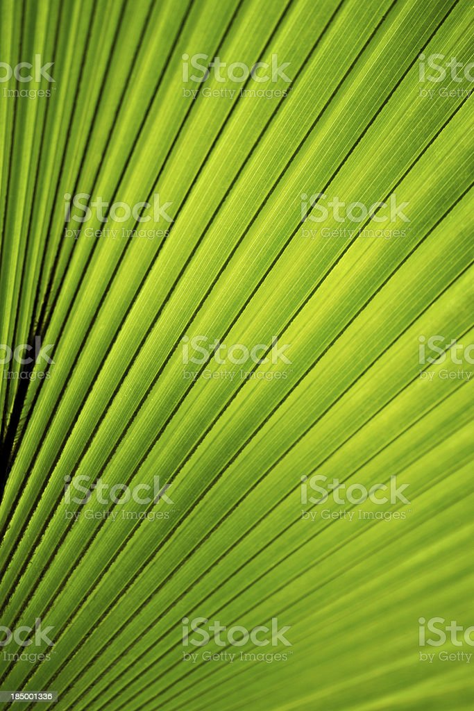 Tropical plant background royalty-free stock photo