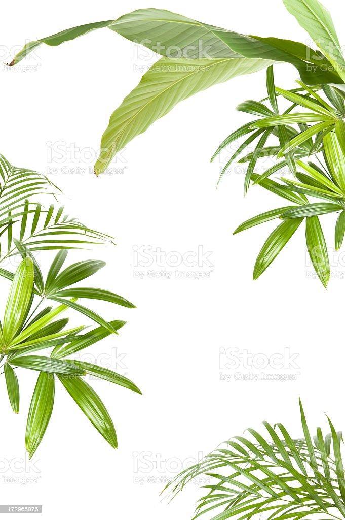 XXL Tropical plant frame stock photo