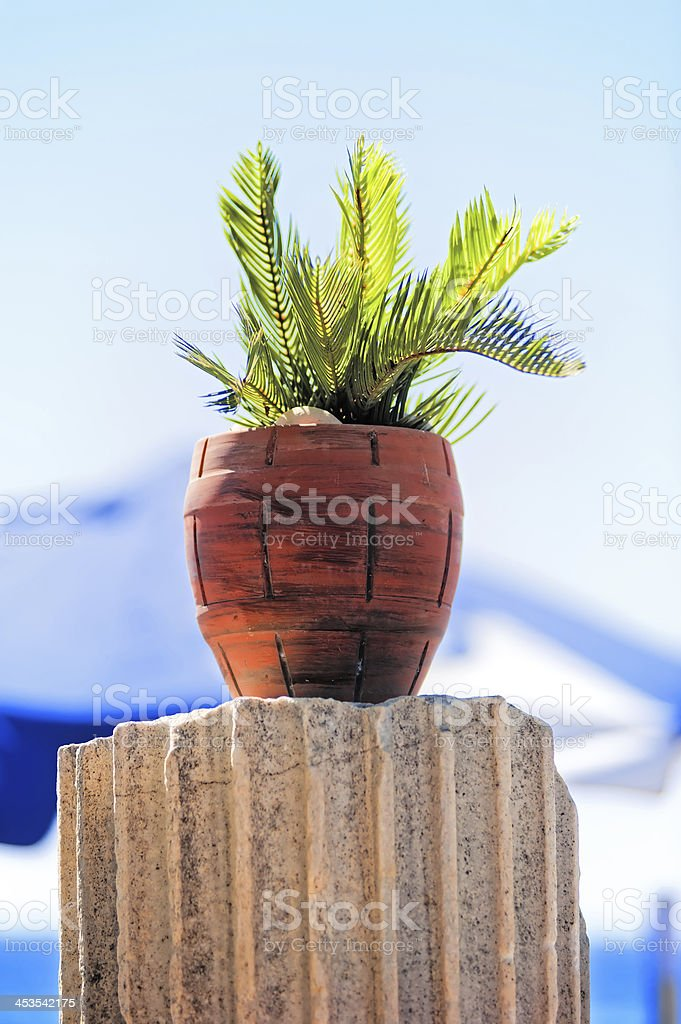 Tropical plant in a red clay pot royalty-free stock photo