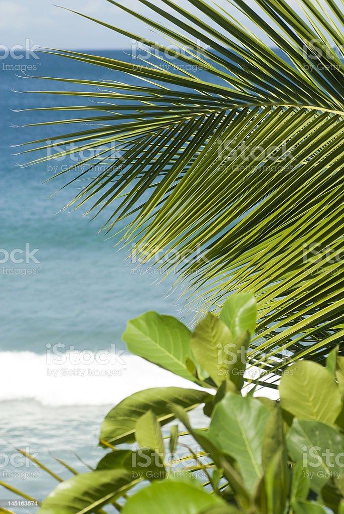 Planta de tropical foto de stock libre de derechos
