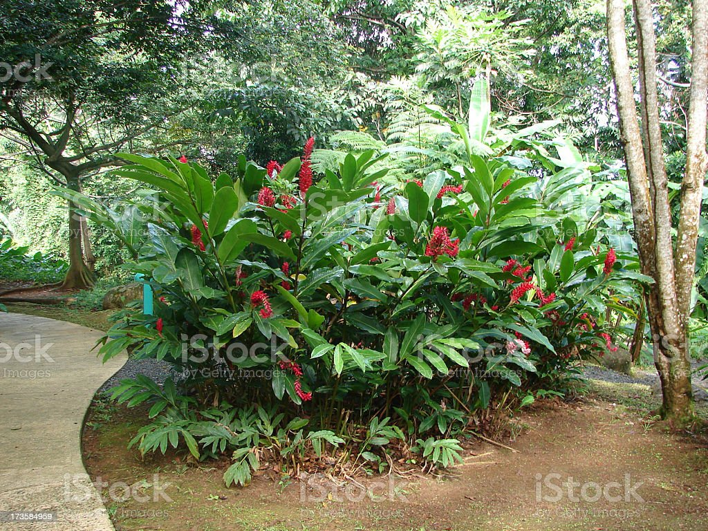 Tropical Plant Puerto Rico stock photo