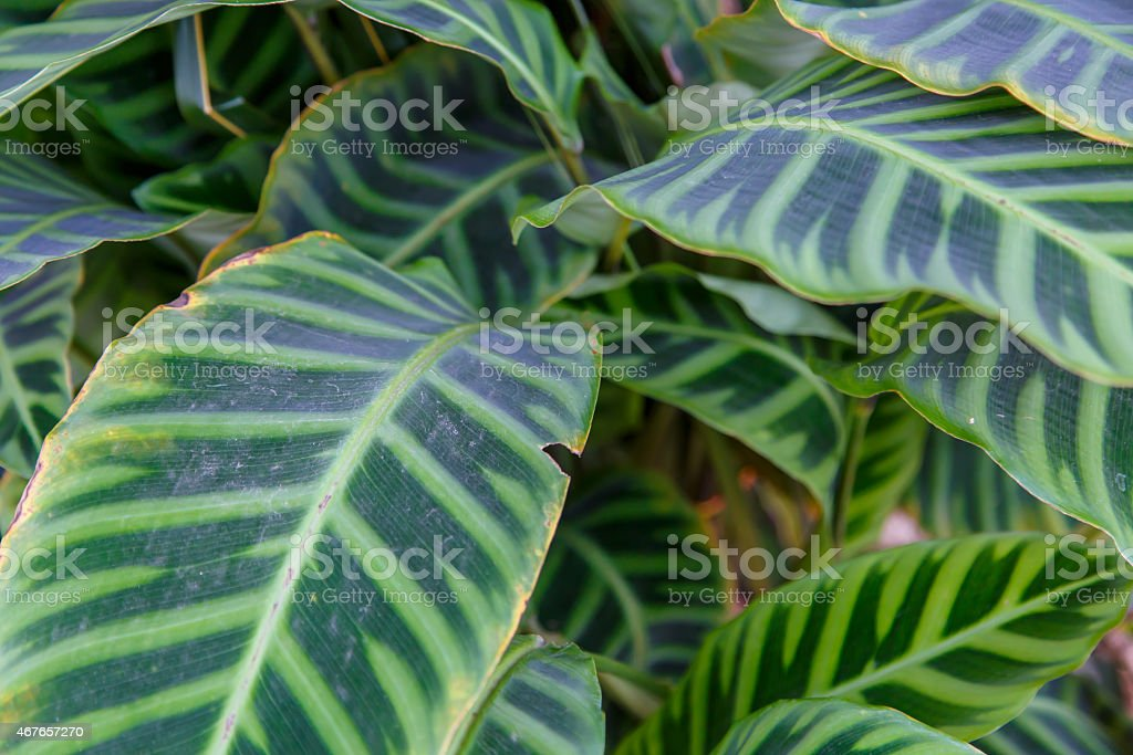 tropical plant with beautiful green leaves stock photo