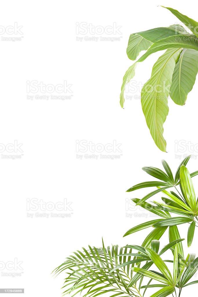 XXL Tropical plants frame royalty-free stock photo