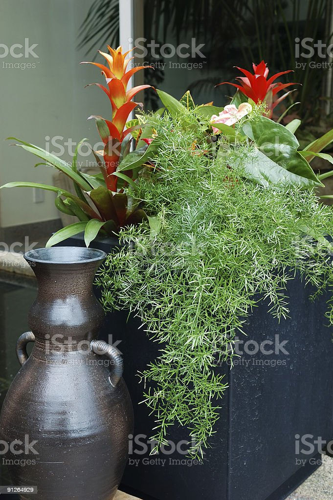 tropical plants in container on patio royalty-free stock photo