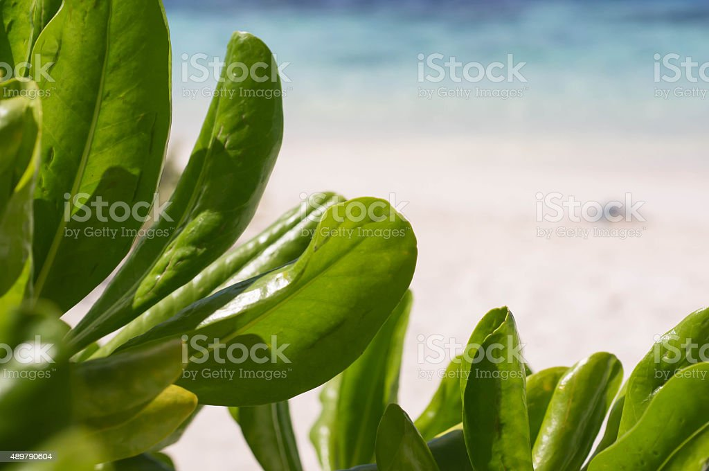 Tropical plants on the background of the beach and ocean stock photo