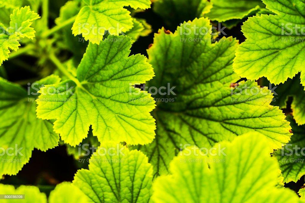 Tropische Pflanzen Lizenzfreies stock-foto