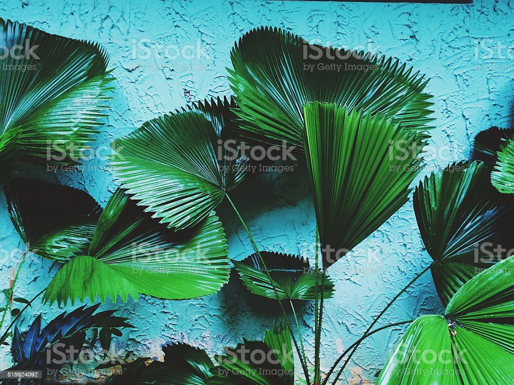 Tropical plants wall background stock photo