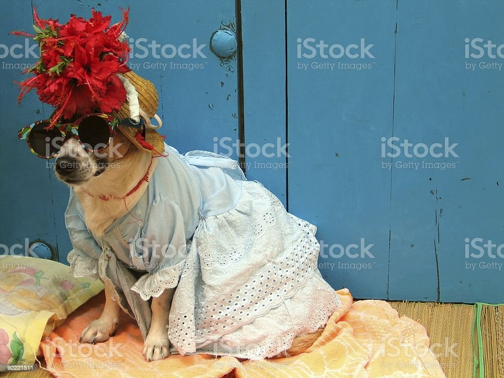 Tropical pooch royalty-free stock photo