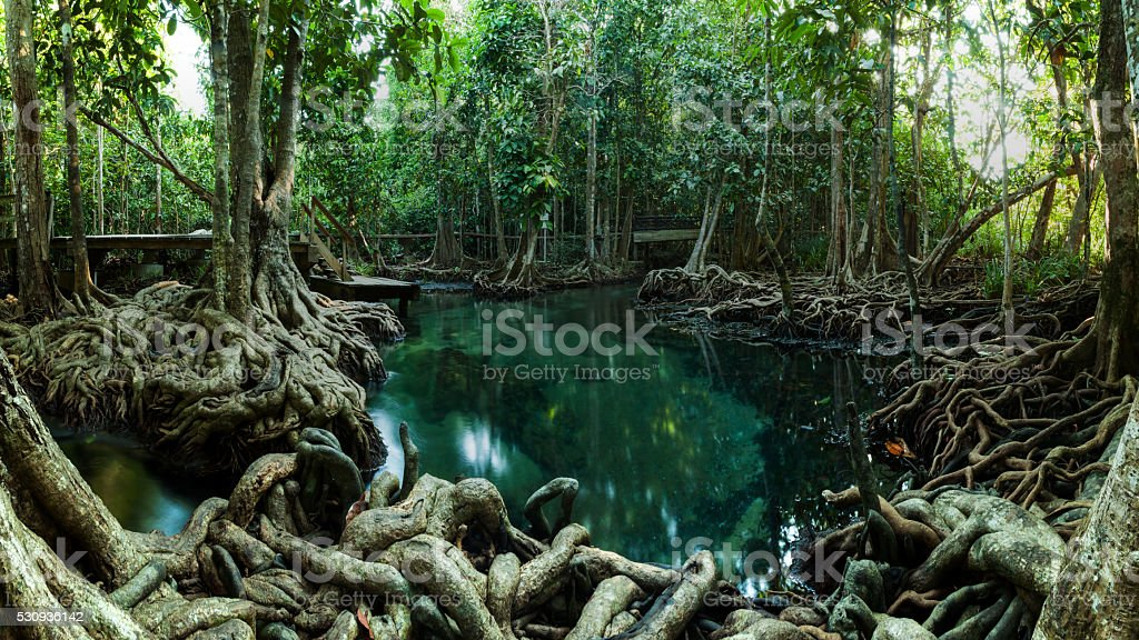 Tropical Pool At A Mangrove Forest Near Krabi In Thailand stock photo