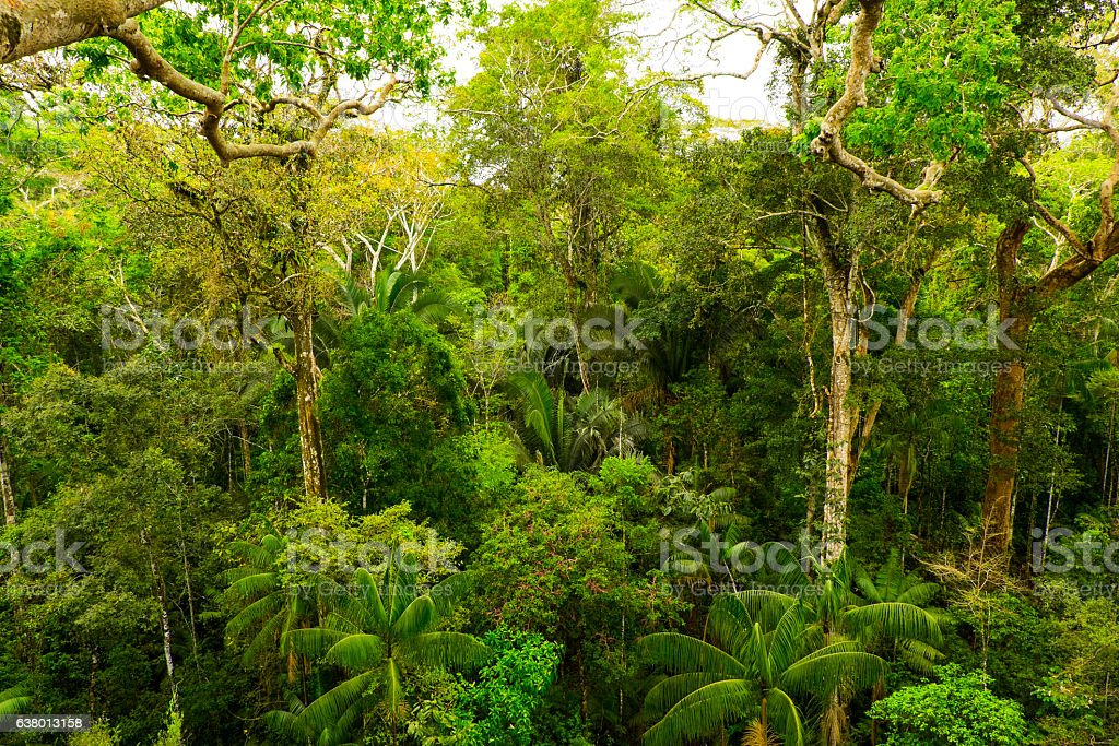 Tropical pristine rainforest stock photo