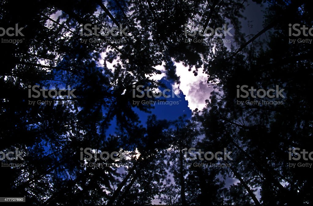 Tropical Raiforest With The Sun Behind stock photo